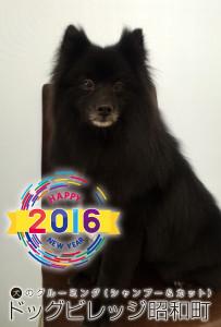 20160129shun.jpeg